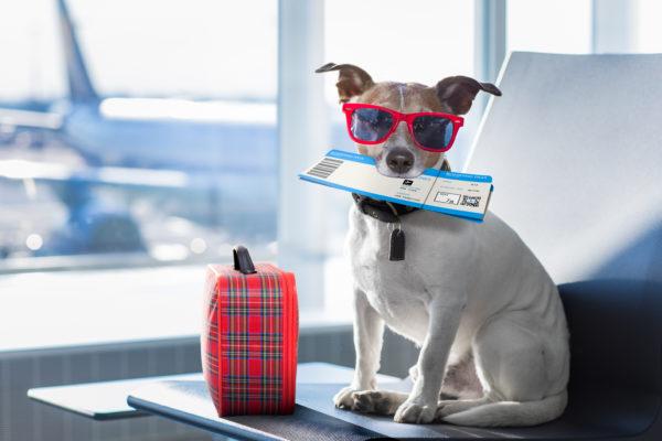 Dog Boarding, Pet Sitting, Waco Texas